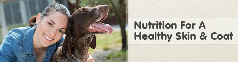 Dog Food for Skin and Coat