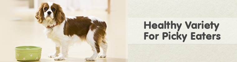 Dog Food for Picky Eaters